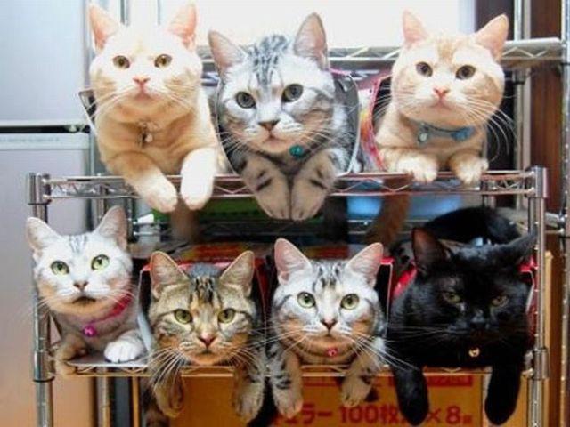カプセルホテル猫版