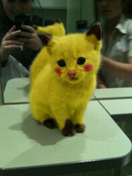 ピカチュー猫