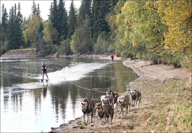 犬ぞり式水上スキー