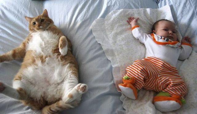 猫と赤ちゃん1