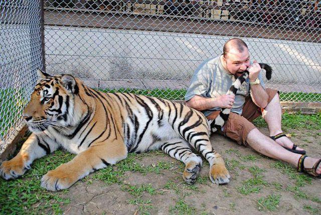 虎のしっぽ