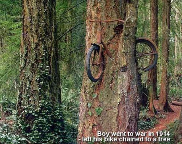 大自然の脅威