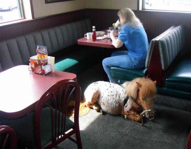 ペット同伴レストラン