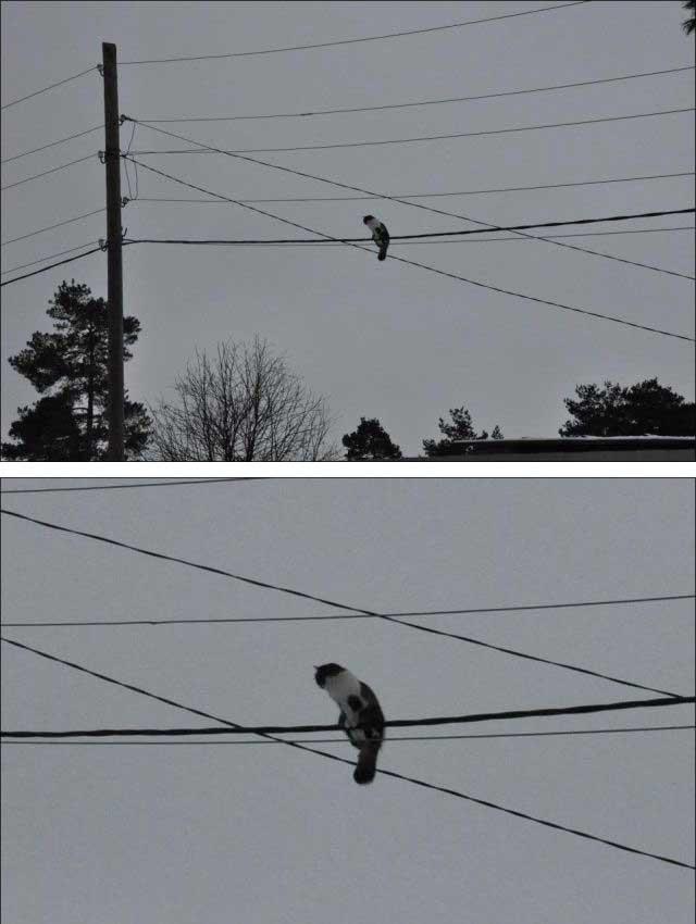 鳥と思いきや