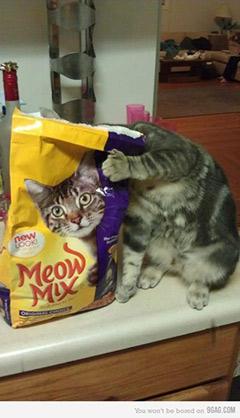 二次元になりかけた猫