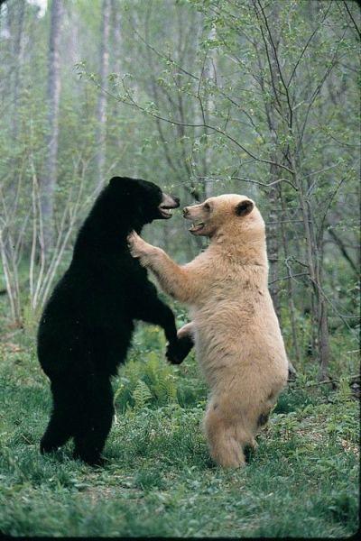 白と黒の戦い
