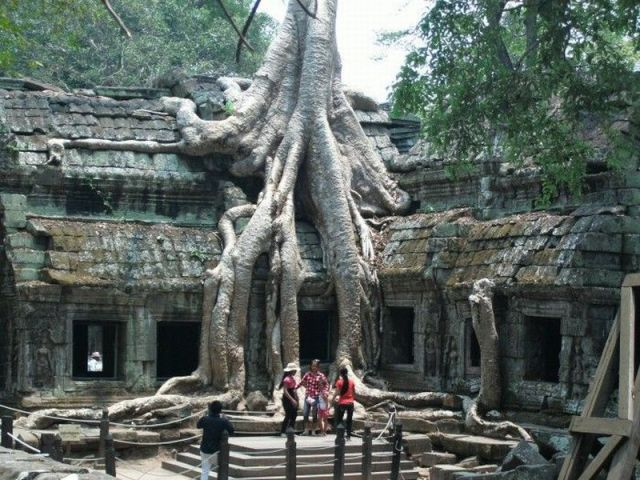 木に埋もれた廃墟