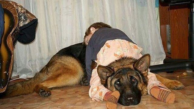 犬の抱きまくら