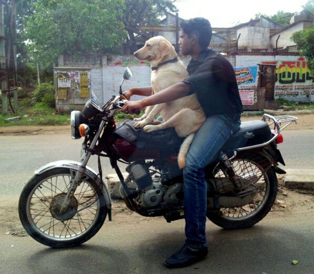 バイク二人?乗り