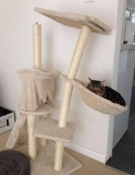 残念なキャットタワー